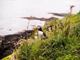 Scotland | Anna Port Photography46