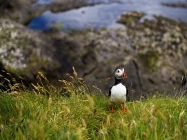 Scotland | Anna Port Photography47