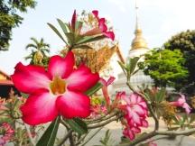 Thailand | Descubriendo el mundo con Anna9