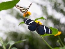 Butterflies   Anna Port Photography4