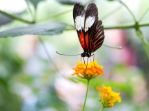 Butterfly   Anna Port Photography5