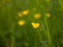 Nature   Anna Port Photography13
