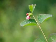 Nature   Anna Port Photography15