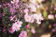 Nature   Anna Port Photography22
