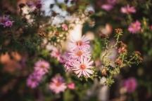 Nature   Anna Port Photography23