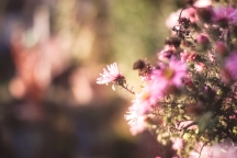 Nature   Anna Port Photography24