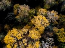 Autumn Colours | Anna Port Photography 2
