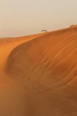 Desert Al Ain | Anna Port Photography4