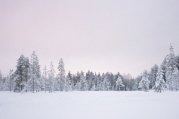 Lapland | Anna Port Photography2