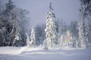 Lapland | Anna Port Photography6