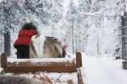 Lapland | Anna Port Photography7