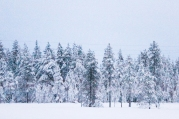 Lapland | Anna Port Photography8
