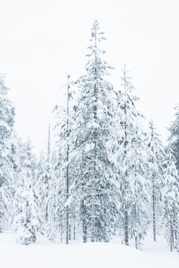 Lapland, Finland | Anna Port Photography51