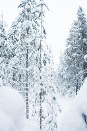 Lapland, Finland | Anna Port Photography52