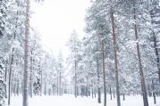 Lapland, Finland | Anna Port Photography55