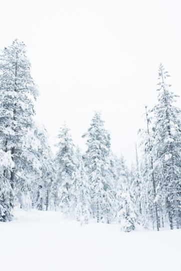 Lapland, Finland | Anna Port Photography56