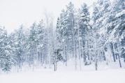 Lapland, Finland | Anna Port Photography58