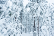 Lapland, Finland | Anna Port Photography61