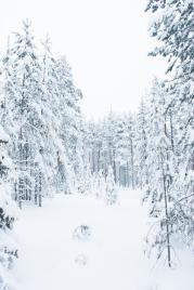 Lapland, Finland | Anna Port Photography62