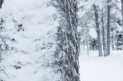 Lapland, Finland | Anna Port Photography63